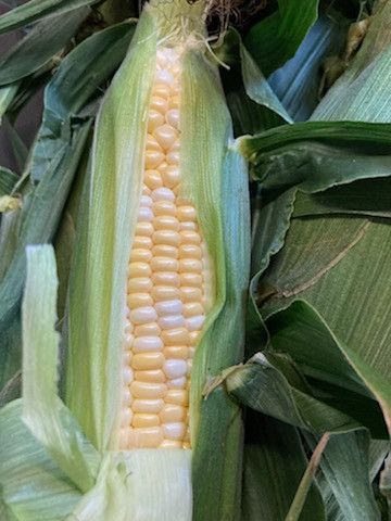 Produce-  Johnstone's Sweet Corn