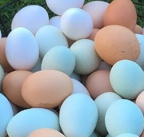Dozen Eggs - Chickens raised on pasture