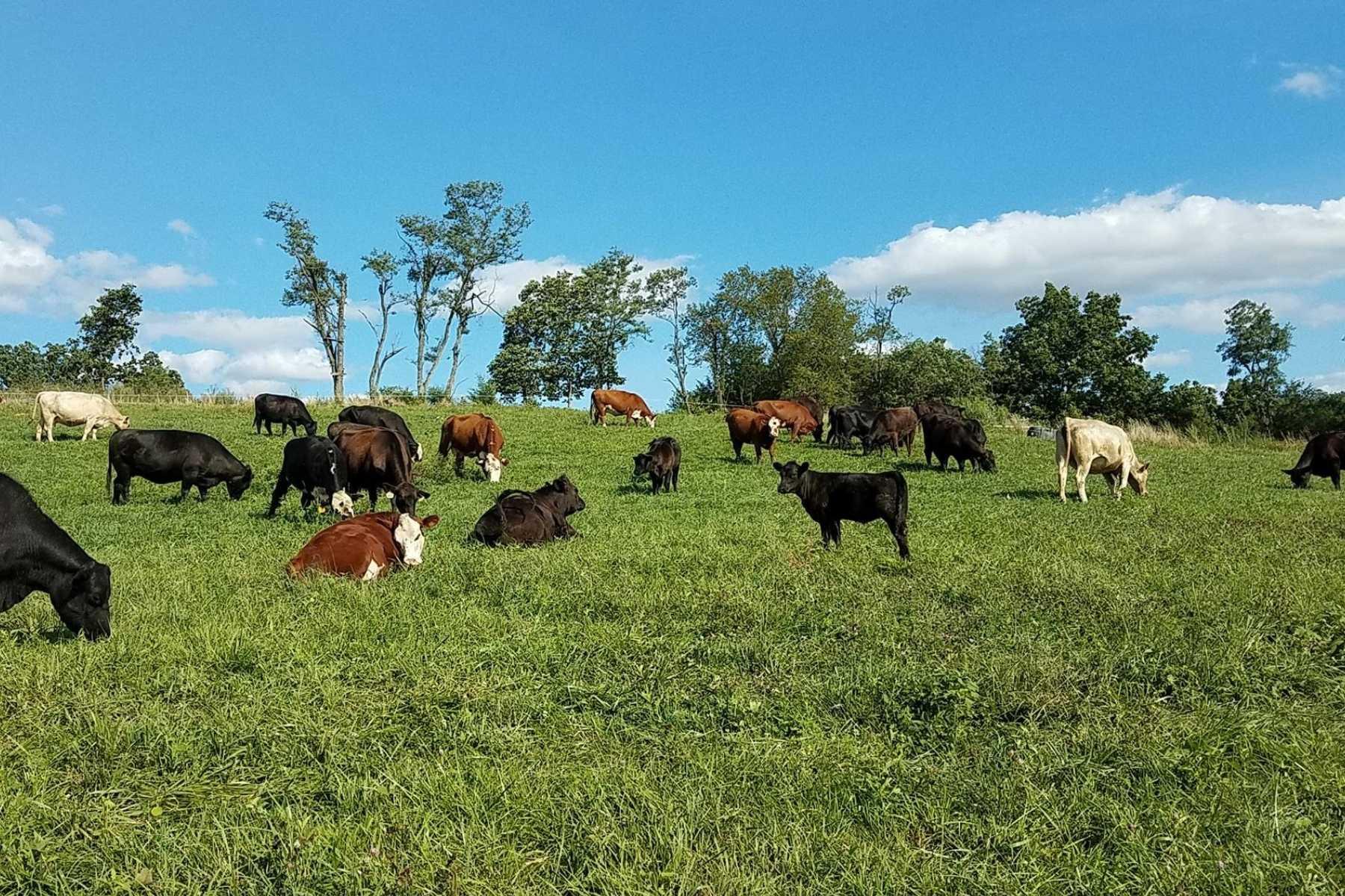 J&L Green Farm Grass Fed Beef