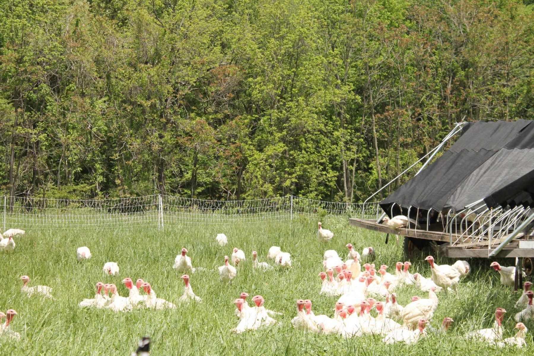J&L Green Farm Pasture Raised Turkey