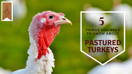 5 Things You Need to Know About Pastured Turkeys