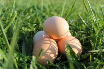 Dozen Pastured Eggs