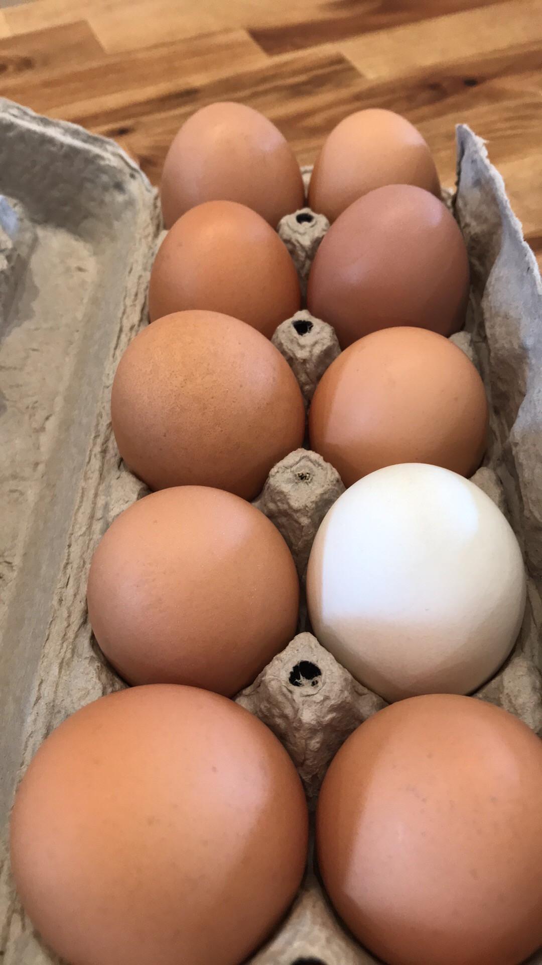 Dozen Large - jumbo Eggs