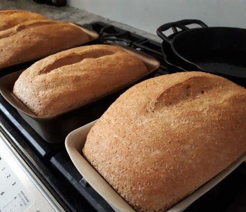 Red Fife Bread (a soaked bread- for highest nutrition and easy digestion)