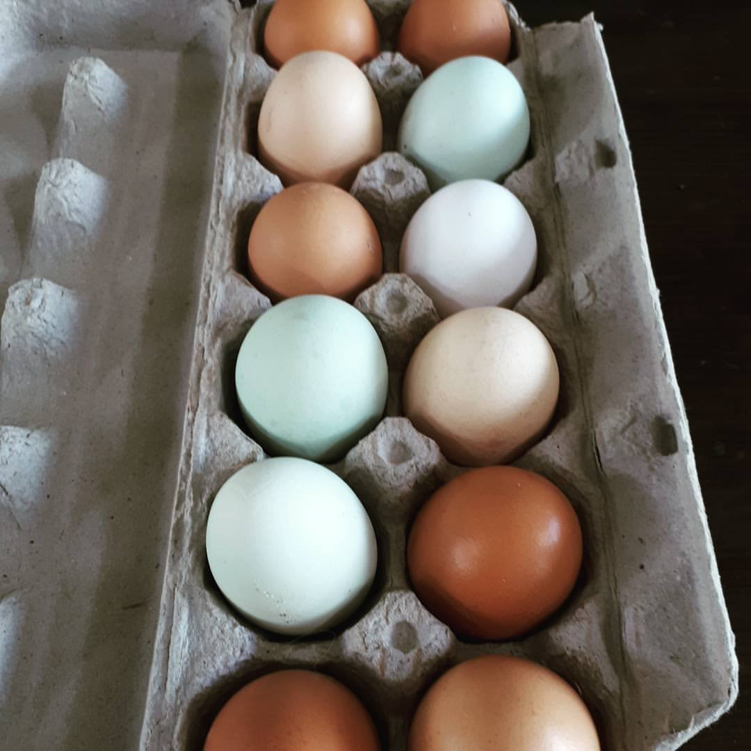 Free Range Eggs from Pasture Raised Hens