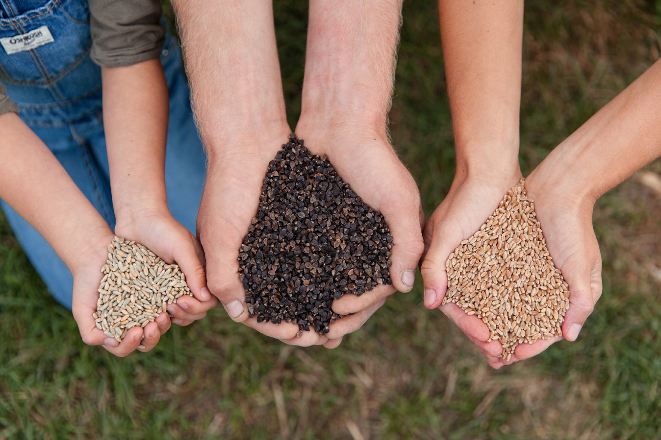Grains for Home-Milling