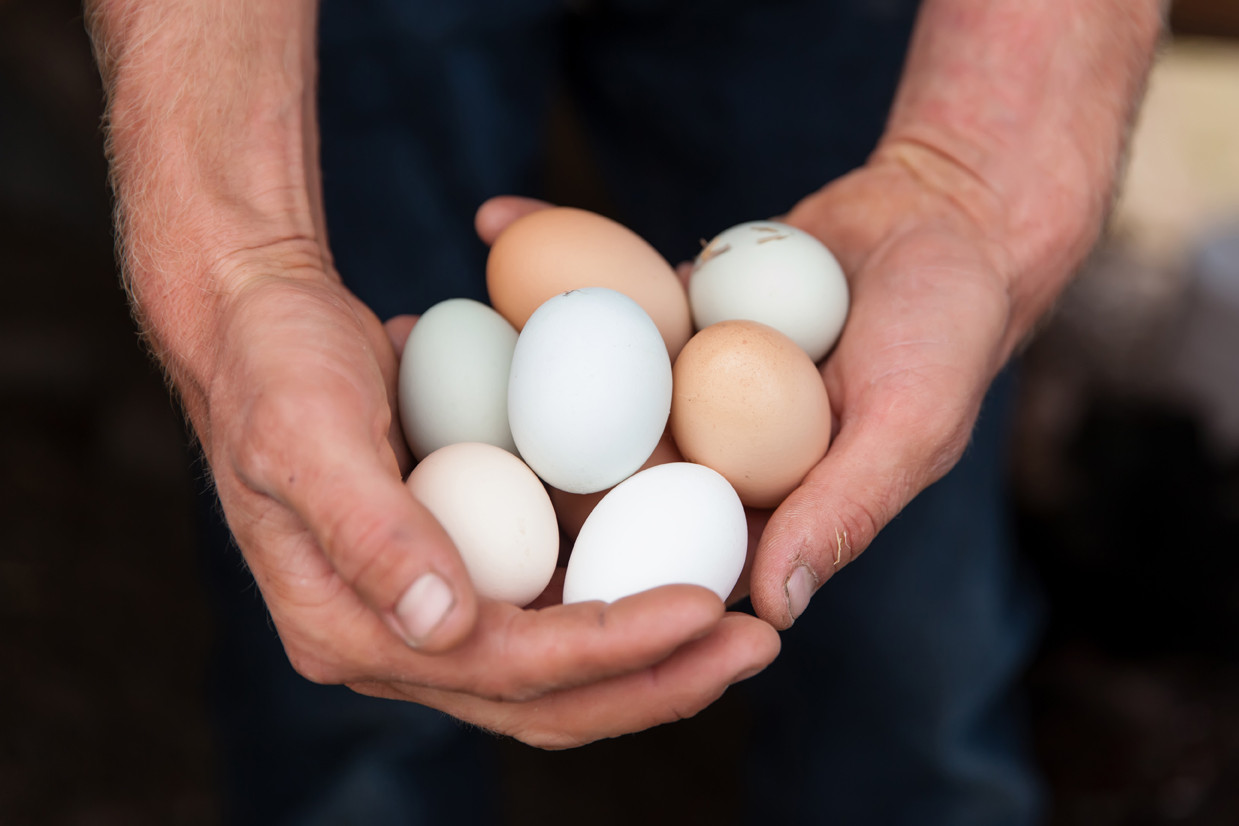 What are TRUE Pasture Raised Eggs?