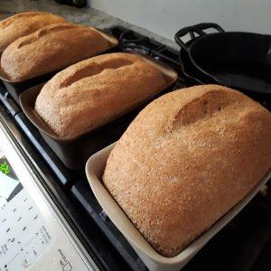 Bread-small.jpg