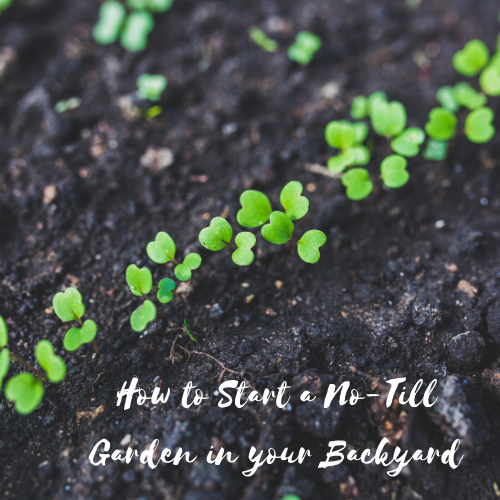 How to Start a No-Till Garden in your Backyard
