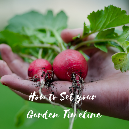 How to Set Your Garden Timeline
