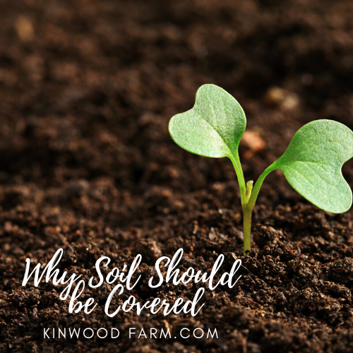 Why Soil Should Be Covered