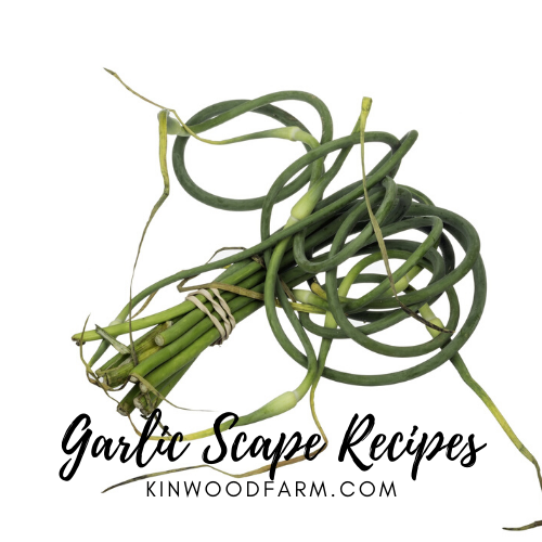 Garlic-Scape-Recipes.png