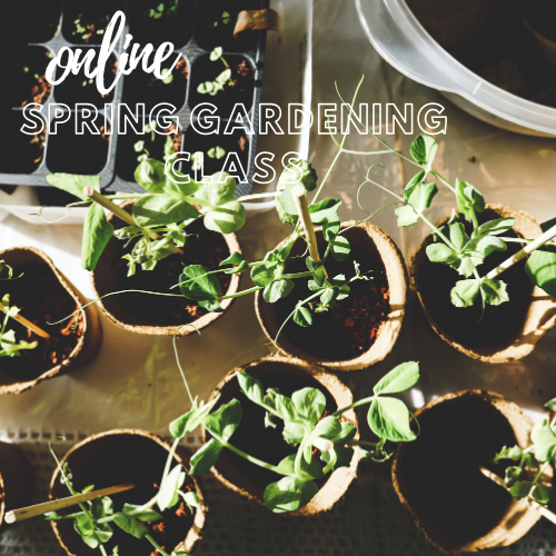 Online Seed Starting Class