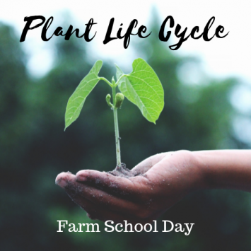 Farm HomeSchool Day - Plant Life Cycle