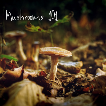 Farm School Day - Mushrooms 101