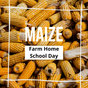 Farm HomeSchool Day - Maize