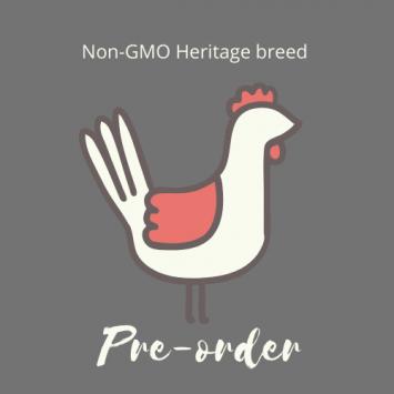 Non-GMO Heritage Chicken Preorder