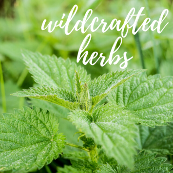 Fresh Wildcrafted Herbs