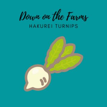 Down on the Farms Hakurei Turnips
