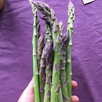Chestnut Cliff Asparagus