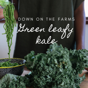 Down on the Farms Green Curly Kale