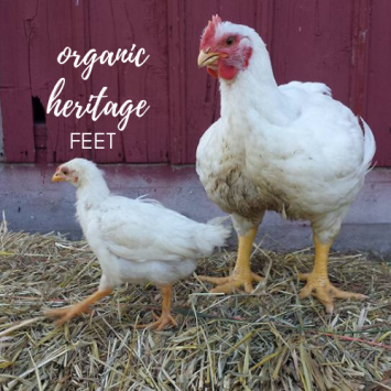 Organic Heritage Chicken Feet