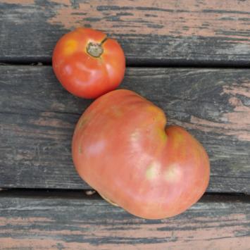 Tomatoes - 1 lb