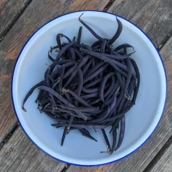 Velour Bush Beans
