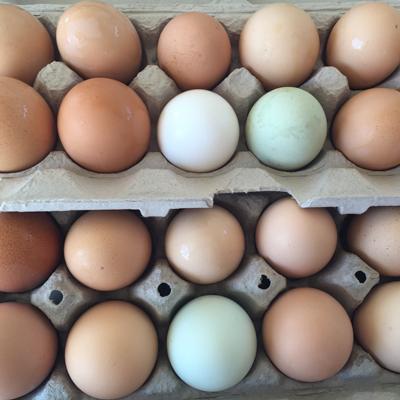 Eggs, Sunshine Ranch