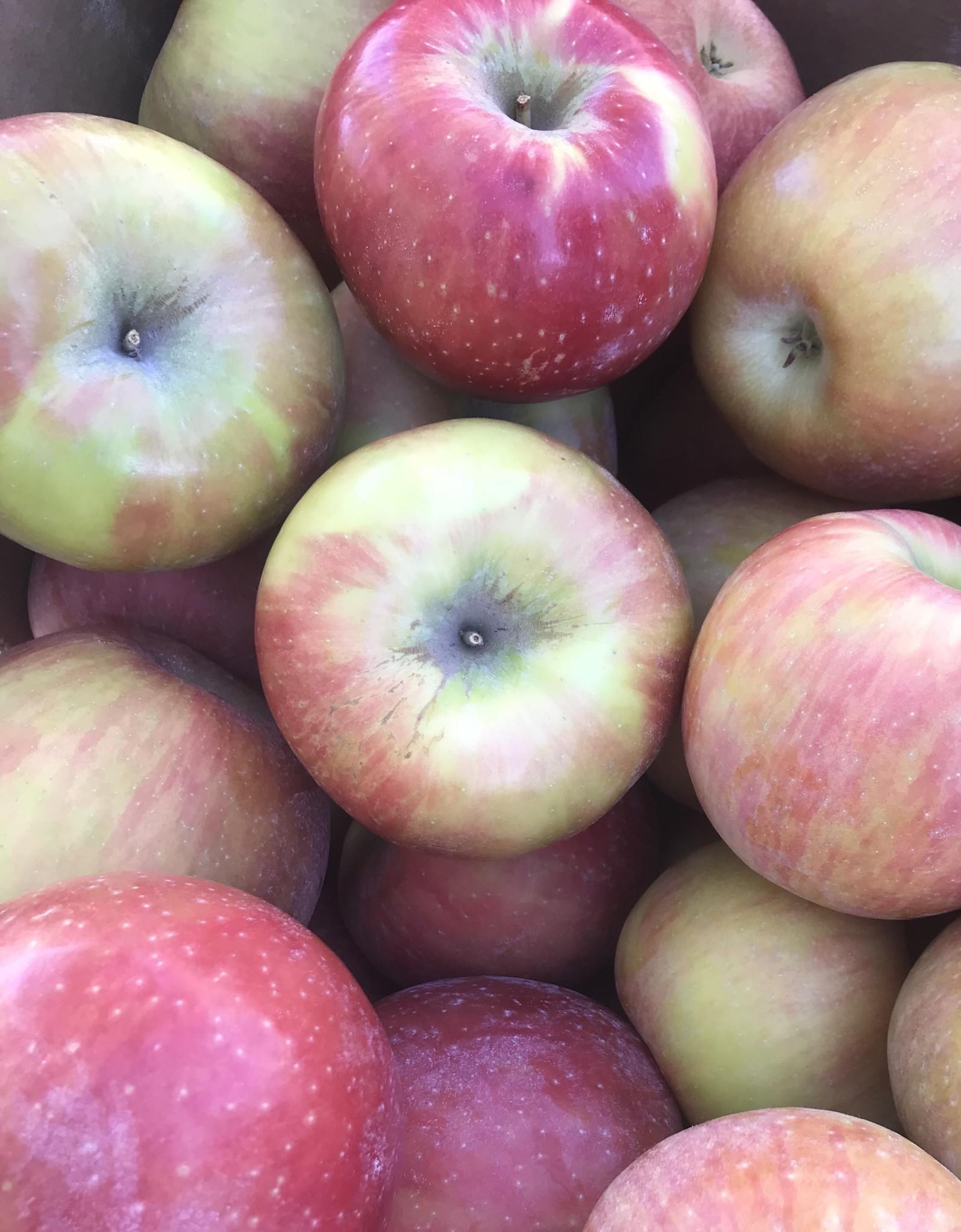 Apples, Honeycrisp