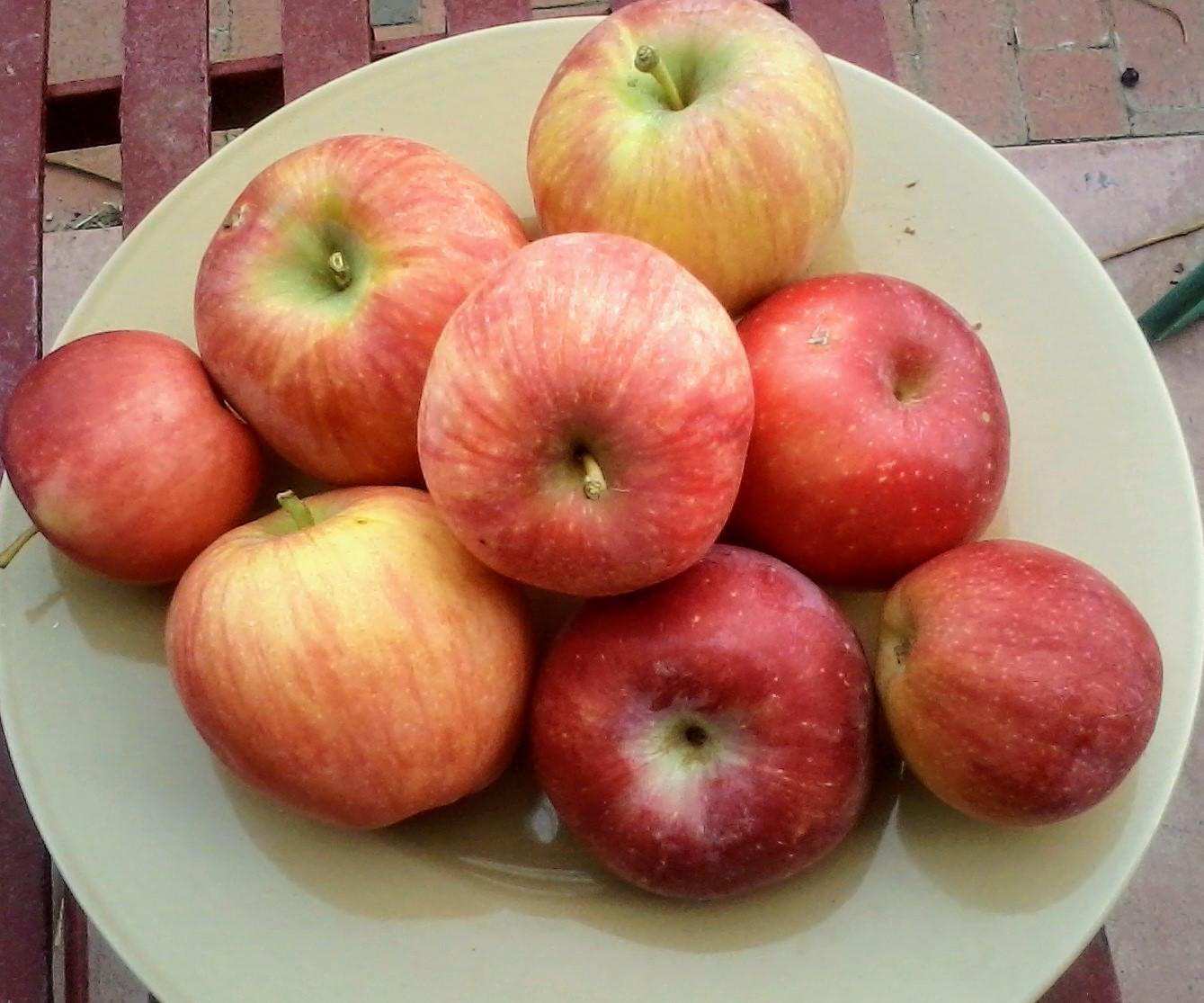 Apples, WAF