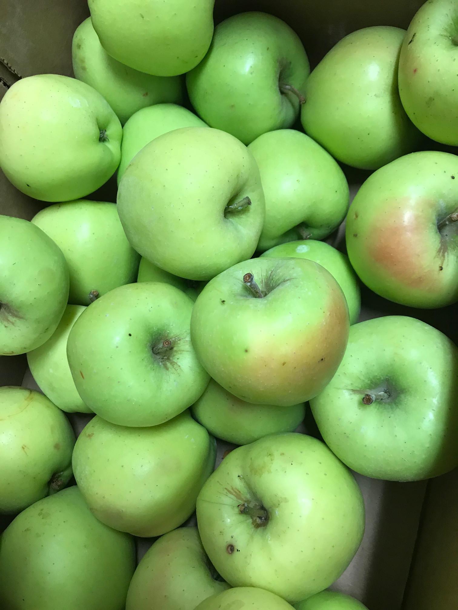Apples, Criterion