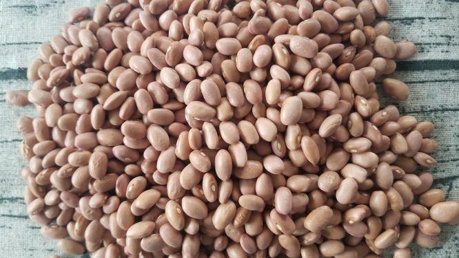 Beans, Pink, BULK, OG