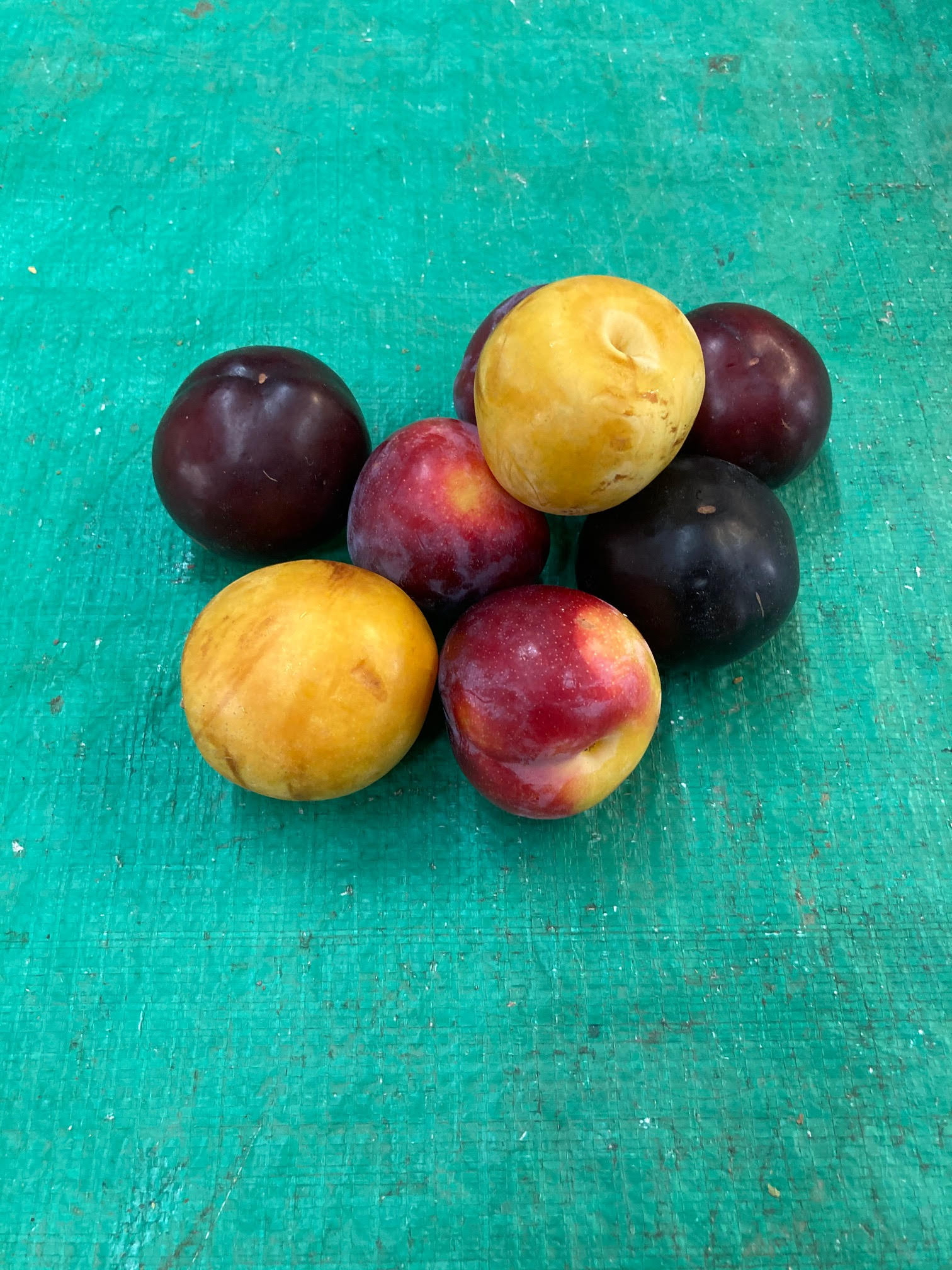 Plums, Mixed WW