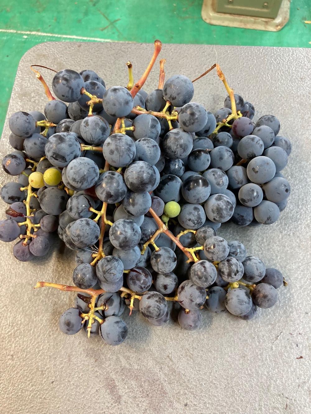 Grapes, Concord WW