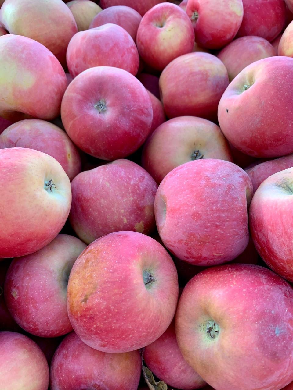 Apples, Fuji FM