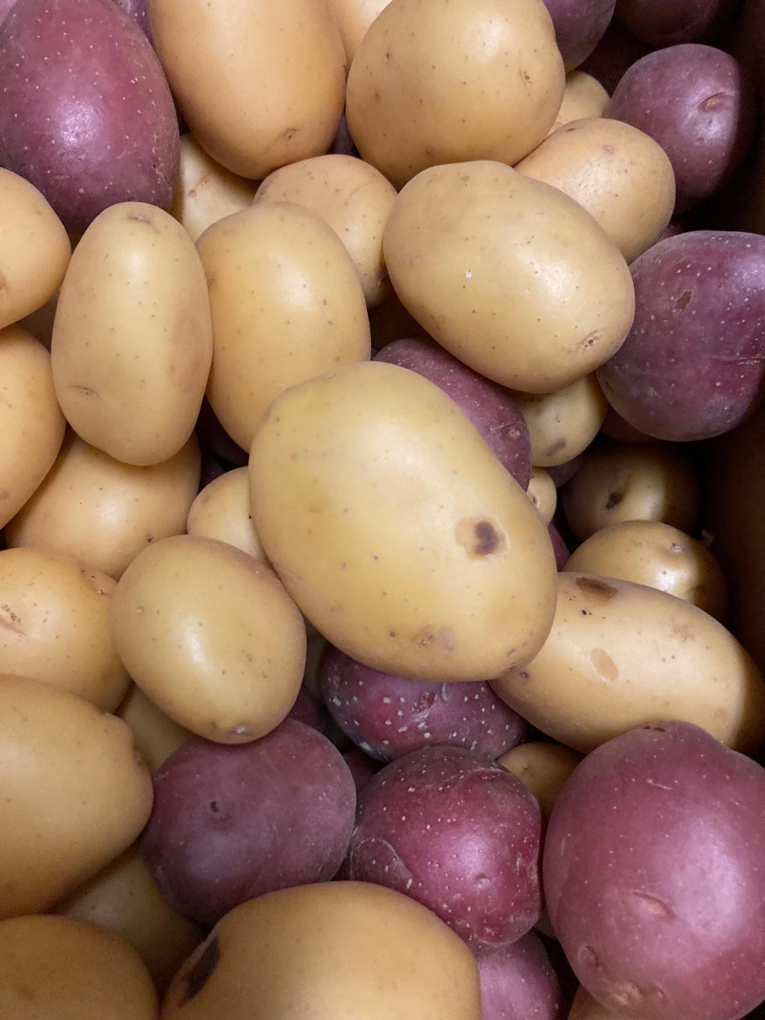 Potatoes, Baby Mixed WW