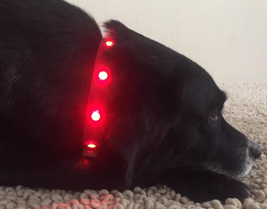 Lighted Pet Collar medium