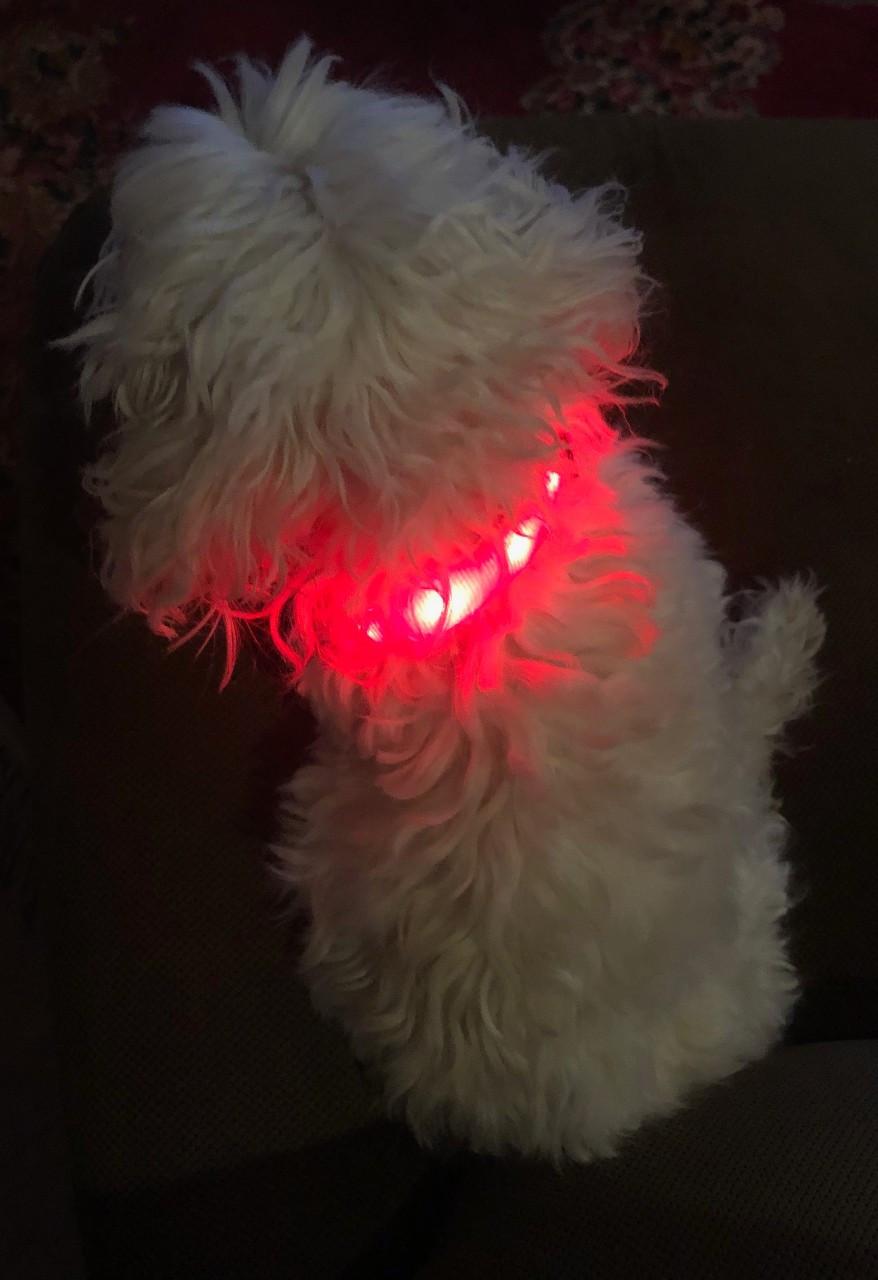 Lighted Pet Collar small
