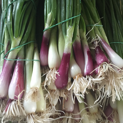 Green Onions Bundle