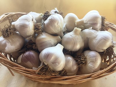 Garlic, By the 1/2# MIXED