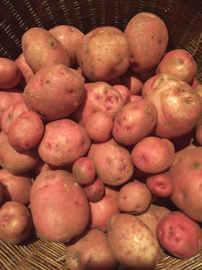 Red Potatoes, B&G