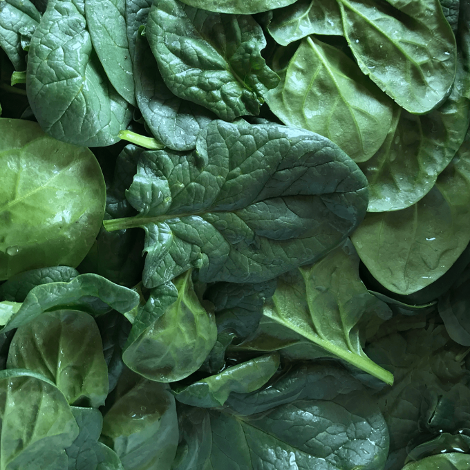 Spinach, Large Leaf KMG