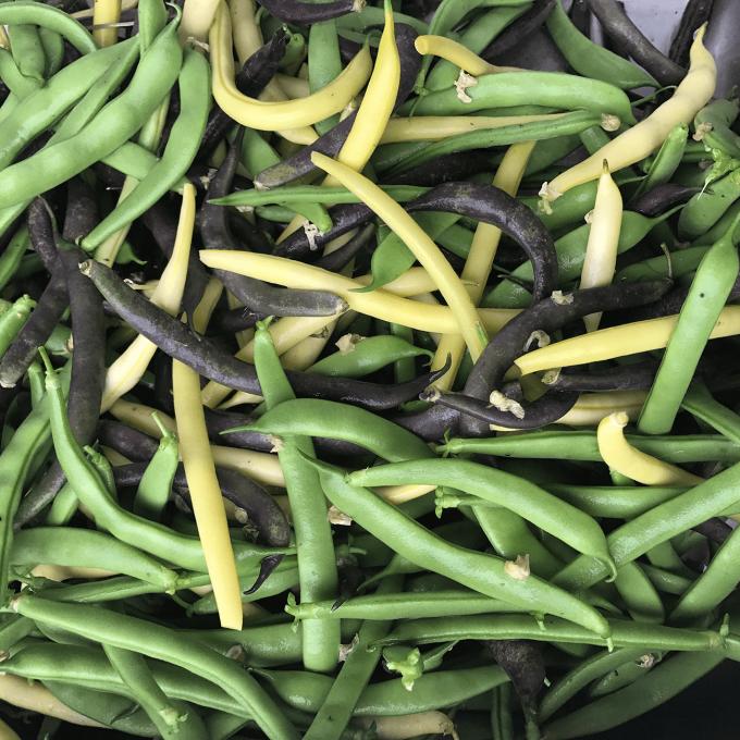 Green Beans, KMG