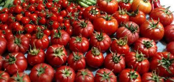 Tomatoes, KMG