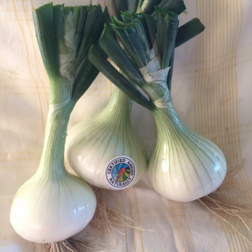 Onions, 2# Fresh Walla Walla