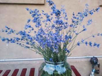 Herbs, Summer Lavender