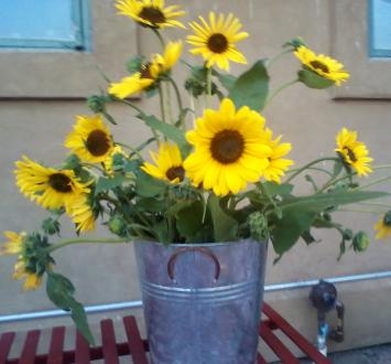 Sunflower Bouquet, WA