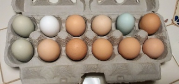 Eggs, Small, CNG PWHF