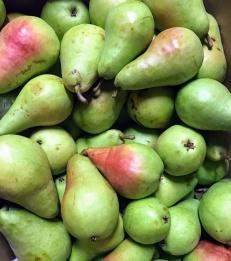 Early Bartlett Pears